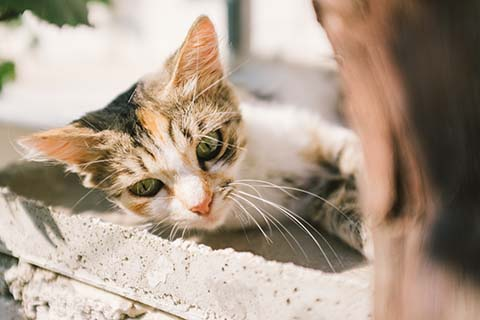 Le chat de Gjirokastër