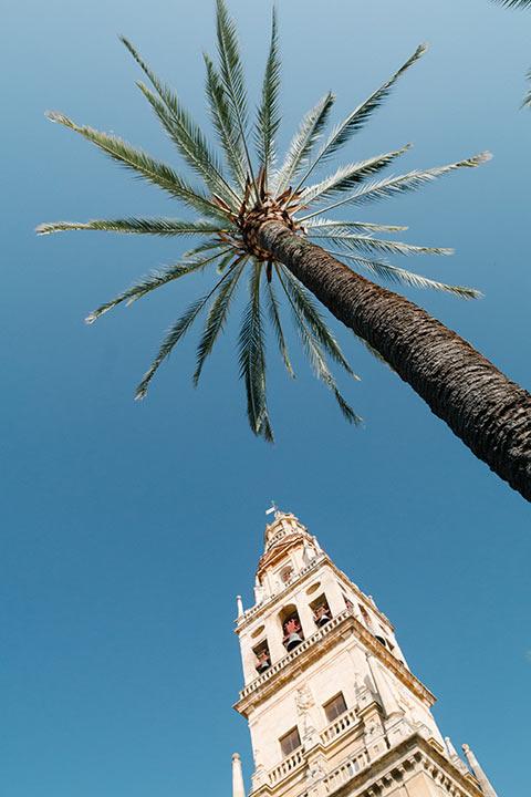 Un palmier à Cordoue