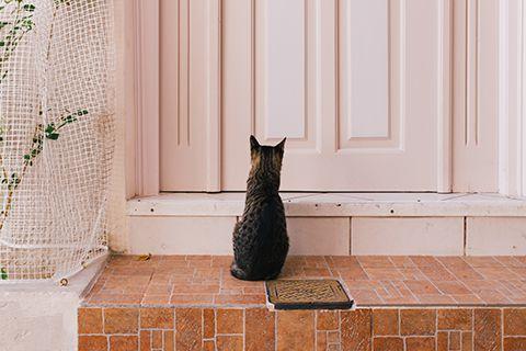 La patience du chat