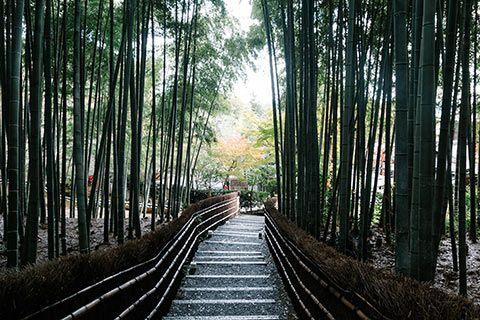 La Bambouseraie du temple Nenbutsu-ji à Kyoto