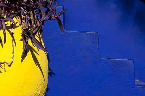 Les couleurs vives du jardin Majorelle