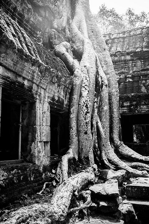 Dans le temple du Ta Phrom