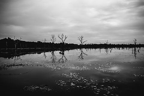 Paysage d'un lac dans la cité d'Angkor